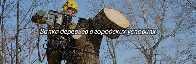 Валка деревьев в городских условиях